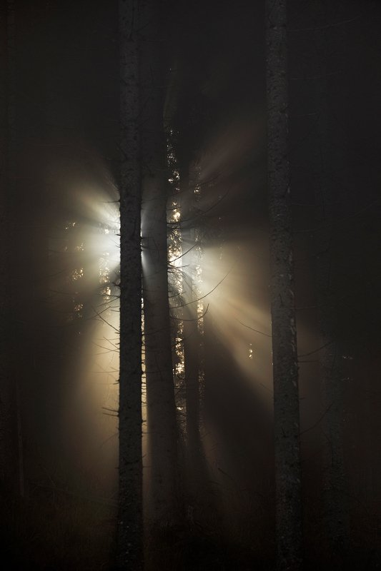 mountains, romania, forest, sunrise, landscape, nature, travel, autumn, trees, fog, light, misty The Soul of the Forestphoto preview