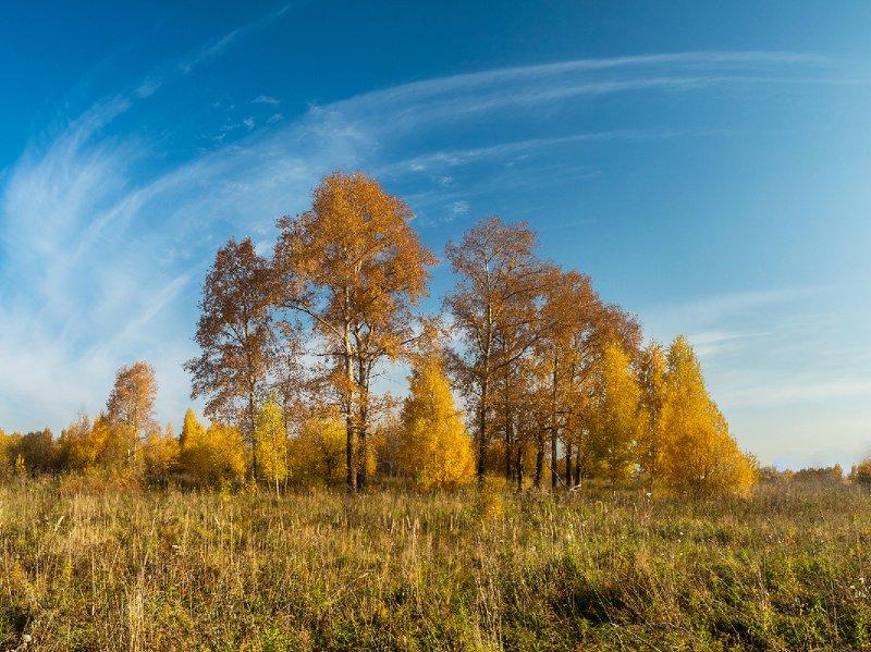 пейзаж, утро, осень, поле, трава, дерево, ярко, киров, небо, солнце, облака Утроphoto preview