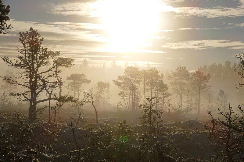 landscape, nature, fog, mist, sunlight, light, mountain, forest, sun, trees, foggy, clouds, frost,  Колдовство туманаphoto preview