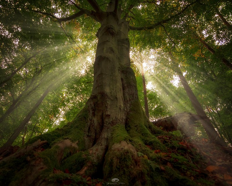 Tree, Forest, Light, Nature, Sunlight, Nikon, Majestic, Autumn, Dawn, Atmosphere Majesticphoto preview