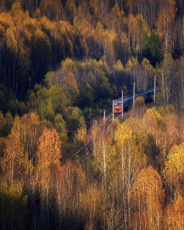 пермский край, осень, золотая осень, осенний лес, осенний пейзаж, ржд, россия, поезд, электричка, железная дорога Осенний экспрессphoto preview