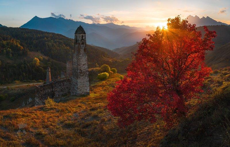 горы, кавказ, ингушетии, пялинг, башни, осень, дерево, красное, закат, солнце, башенный комплекс, Осень в Ингушетии!photo preview