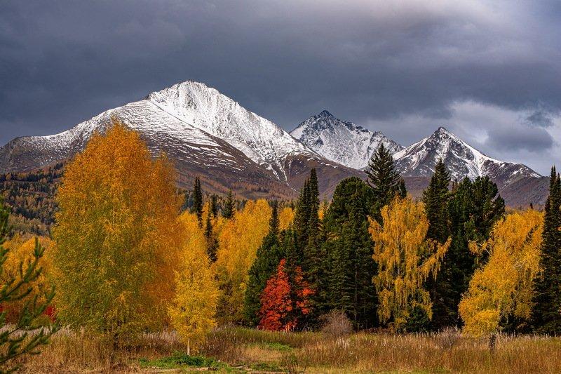 алтай. осень. горы. Алтайская   осень фото превью