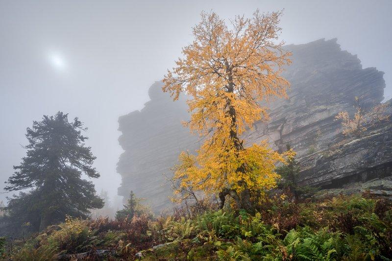 Осень в туманеphoto preview