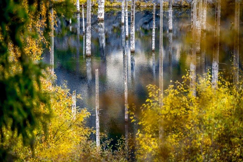 казахстан, горы, тянь-шань, кунгей-алатау, озеро, каинды, кольсай, кольсайский национальный парк, осень, Озеро Каинды осеньюphoto preview