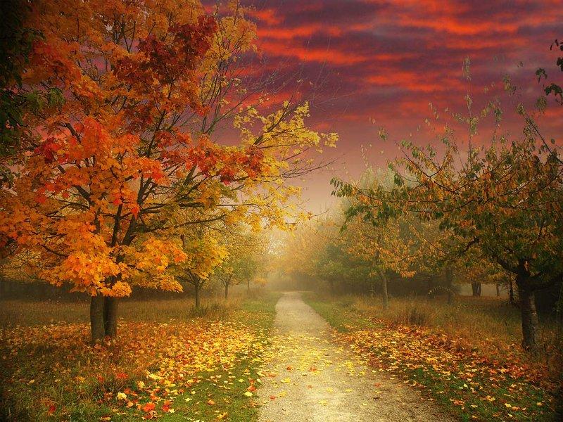digital art Осенняя дорогаphoto preview