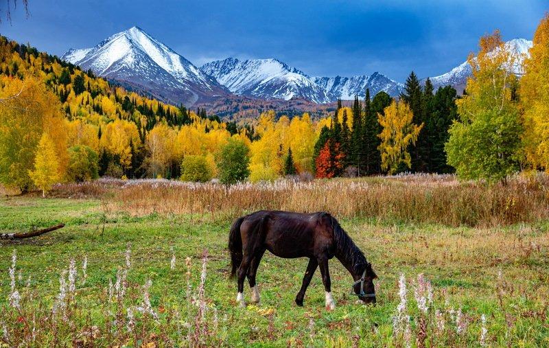 горы. осень алтай *** фото превью
