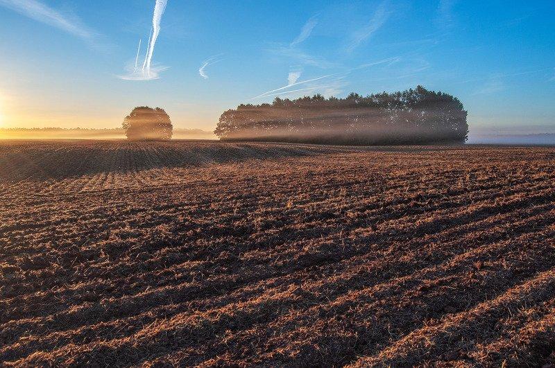 утро, рассвет, поле, солнце, туман, рассвет ***photo preview