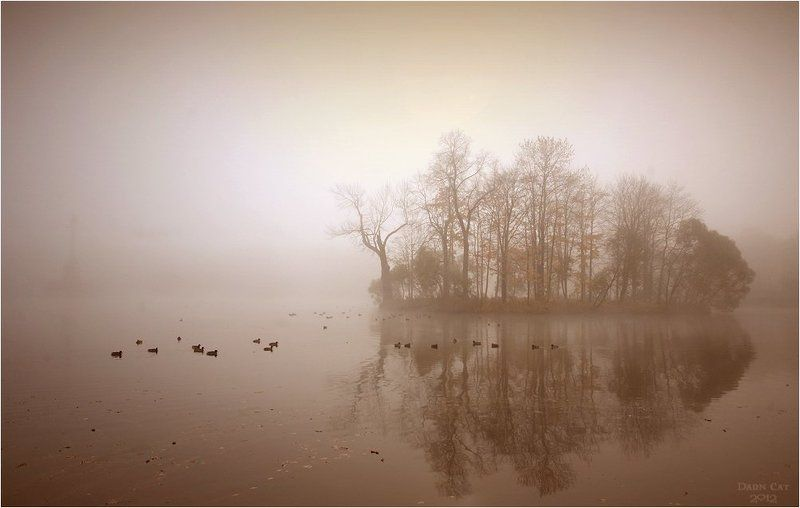 питер, туман, пушкин, пруд, утки, пейзаж, призраки, остров Призрачный пейзажphoto preview