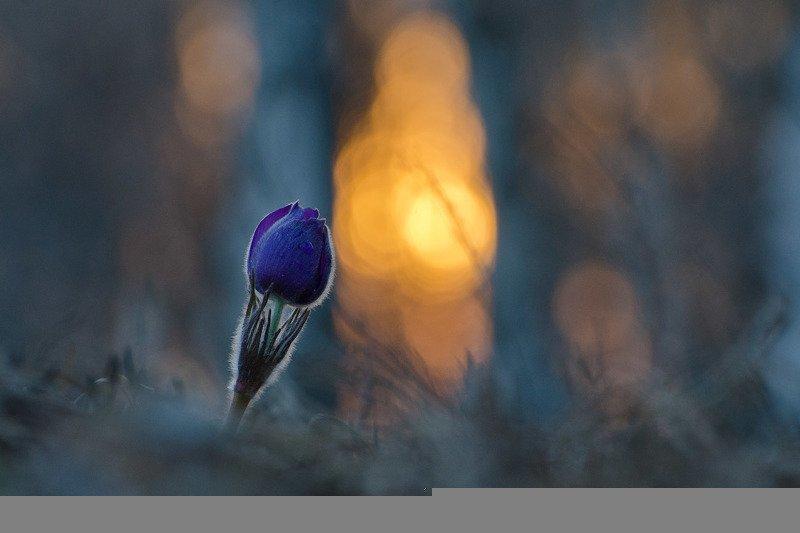 сон - трава, вечер На границе сновиденийphoto preview