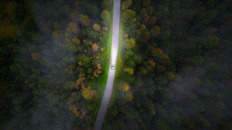 mood,landscape,forest,fog,photoshop,drone Alonephoto preview