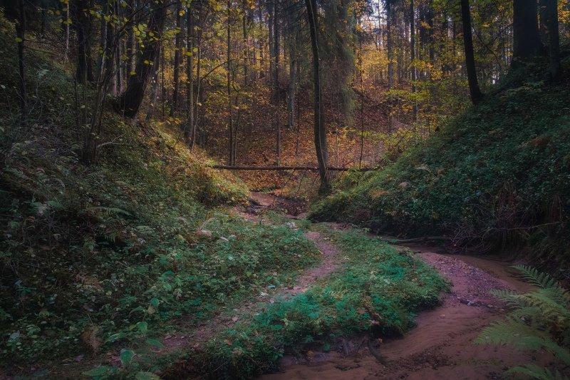 Осень в таинственном лесуphoto preview