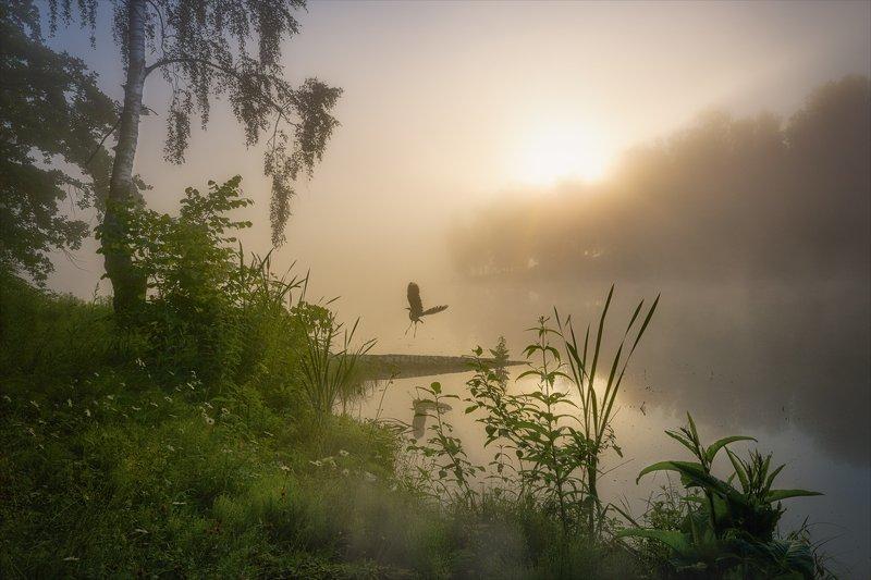 Улетай птичка...photo preview