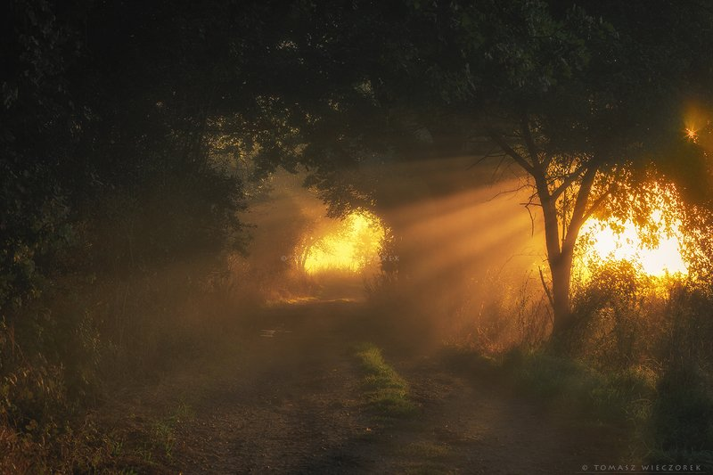 landscape, poland, light, entrance, tunnel, village, autumn, awesome, amazing, rays, sunrise, sunset, lovely, nature, travel, morning, trees Entrance to another worldphoto preview