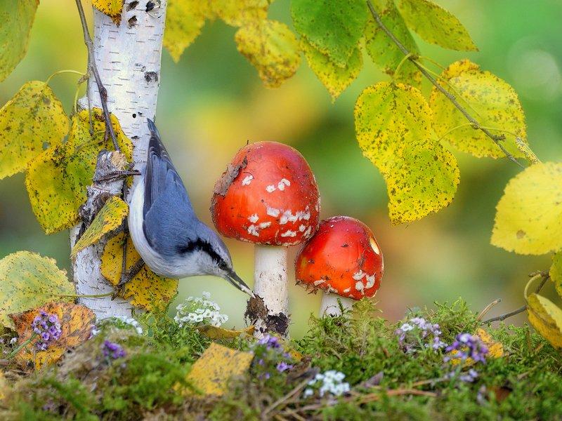 В осеннем лесу 2photo preview