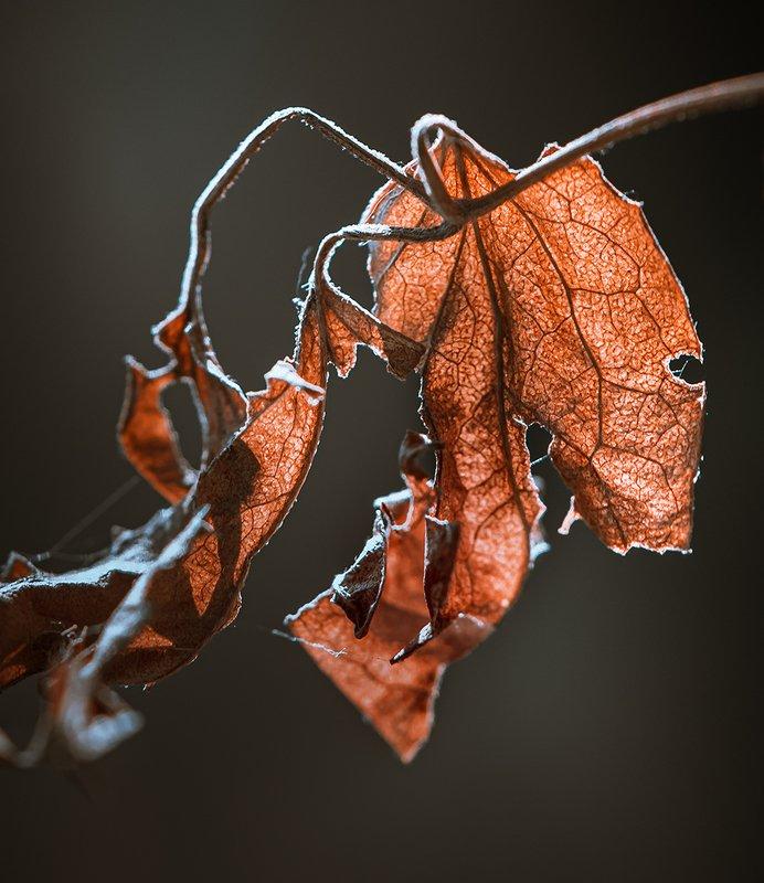 природа, макро, осень, сухой лист, паутина Щит и мечphoto preview