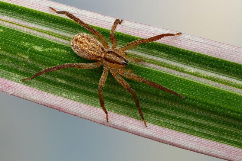 макро,природа,паук,цвет,коричневый,зеленый,животное,растение,трава,голубой Магистральphoto preview
