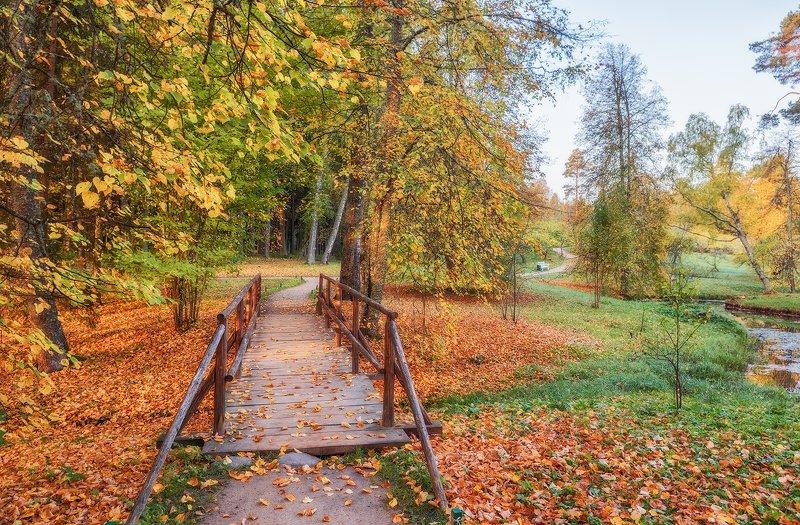 михайловское, пушкинские горы, осень, пушкинские места photo preview