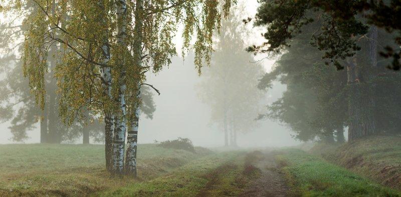 питер, павловскийпарк, павловск Снова осень . . .photo preview