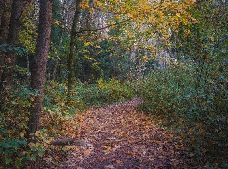 Осень. Таинственный лес.photo preview