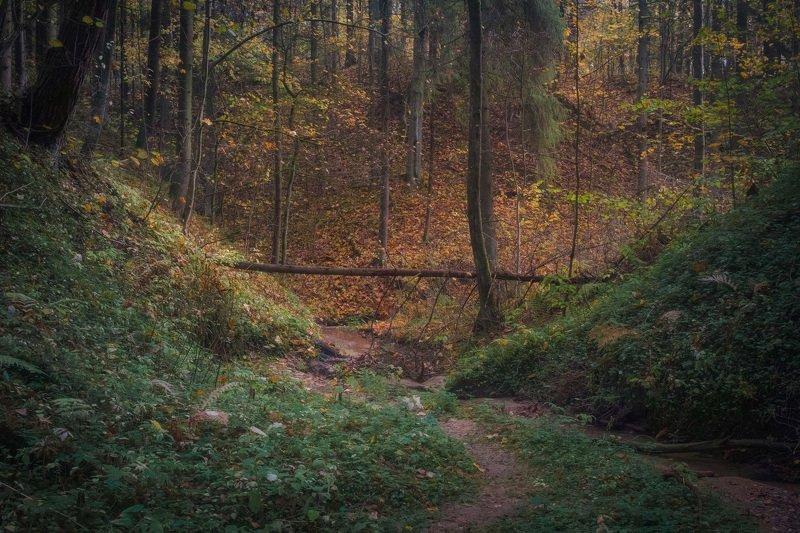 Осень в таинственном лесу IIphoto preview