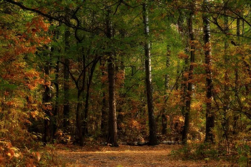 Лес в октябреphoto preview