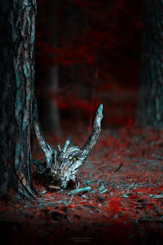 dragon's trees
