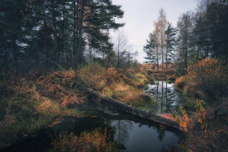 Осень-она не спросит, осень-она придёт...© фото превью