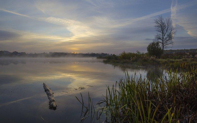 утро, туман, архангельское Живописное утроphoto preview