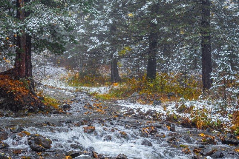 алтай. осень. горы. Первый снег. фото превью