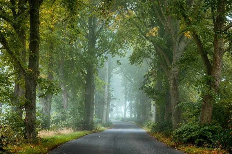 misty road path autumn fall fog dranikowski foggy morning magic trees light Misty roadphoto preview