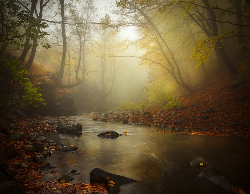 landscape nature scenery forest wood autumn mist misty fog foggy river mountain staraplanina bulgaria туман лес Аutumn prelude / Осенняя прелюдияphoto preview