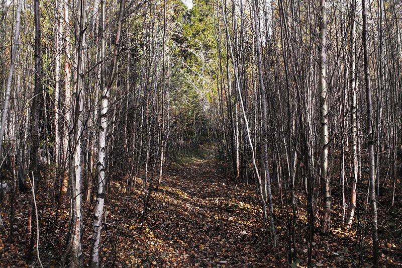 Прогулка в онежском лесу.photo preview