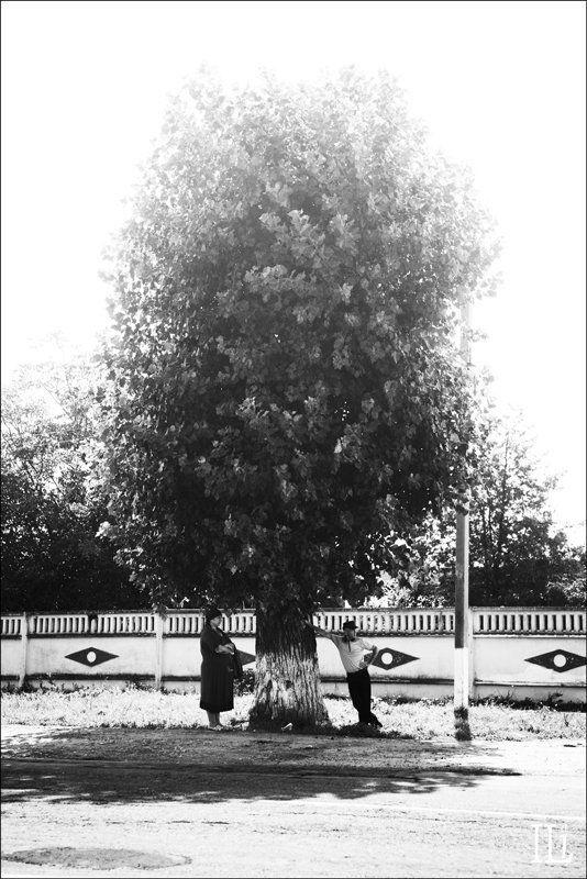 дерево, тень Похвала тениphoto preview