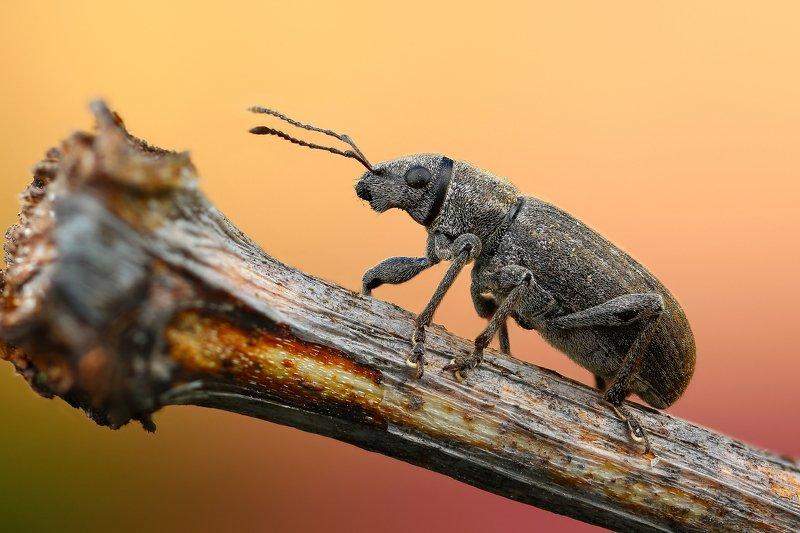 макро,природа,насекомое,животное,жук,долгоносик,цвет,растение,коричневый На бревнеphoto preview