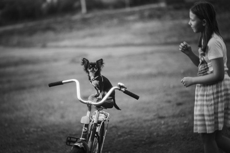 лето дети собака монохром жанр Поехали!photo preview