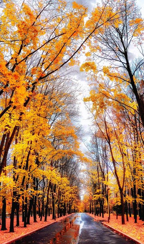 осень Осенние аллеи МГУphoto preview