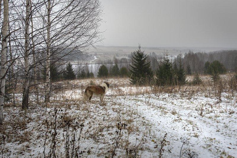 По первому снегу.photo preview