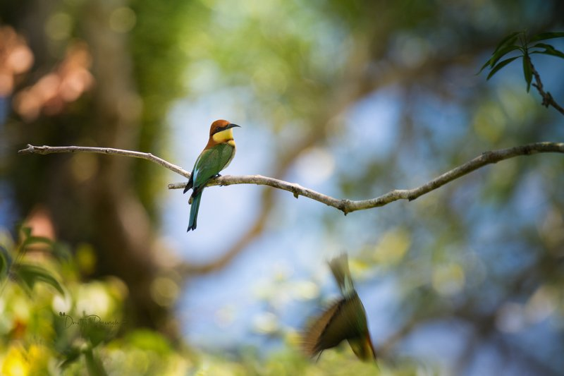 природа, животные, птицы, насекомые,вьетнам, остров фукок Красотка фото превью