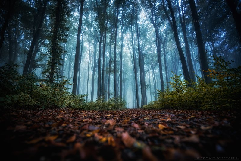 landscape, poland, light, entrance, autumn, awesome, amazing, sunrise, sunset, lovely, nature, travel, morning, trees, deep, fog, mist, climate, mystery Deep in the forestphoto preview