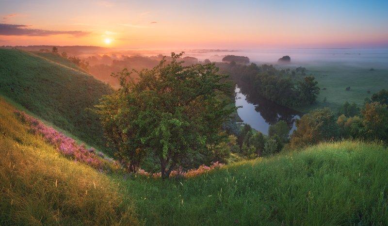 пейзаж, рассвет, утро, солнце, холмы, река, Псёл, вид, панорама, туман, луг, landscape, sunrise, morning, sun, fog, river, Psel, hills, trees, grass, view, panorama, meadows, foggy, light, mist, sky, clouds, colors ***photo preview