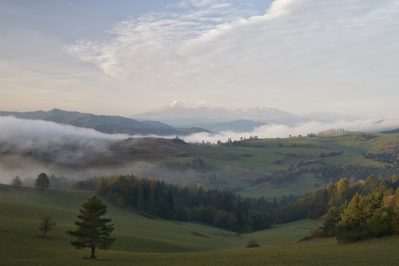 mist,mountains,sunrise,tree,pieniny,tatry Pieninyphoto preview