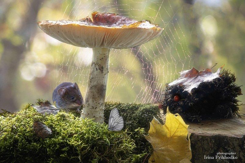 грибы, мох, постановочная фотография, крупный план, осень, лесная жизнь Лесные сказкиphoto preview