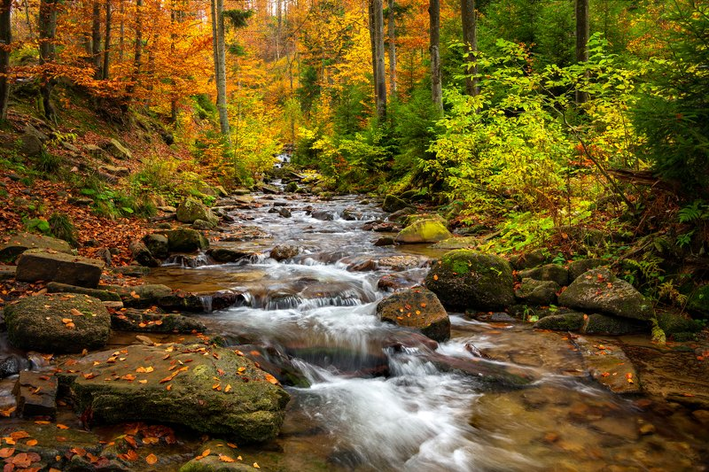 nature, forest, polska, poland, landscape, colors, autumn, waterfall Kaskady Rodłaphoto preview