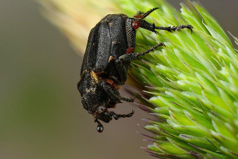 макро,природа,насекомое,животное,жук,цвет,растение,зеленый,черный Транспорт для клещейphoto preview