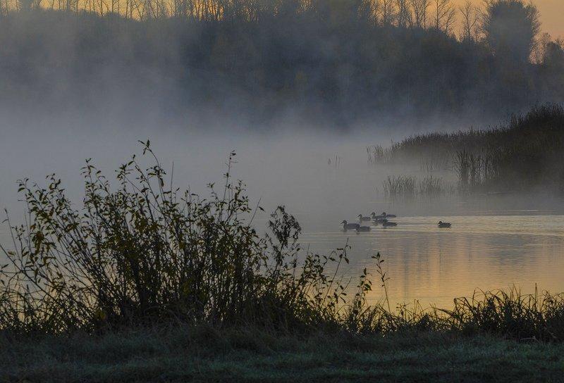утро, пруд, утки, архангельское Утки с подходаphoto preview