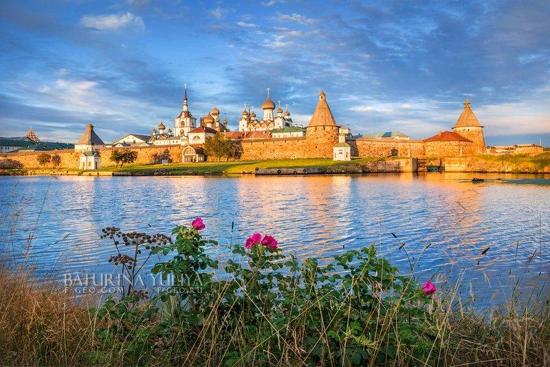соловки, соловецкие острова Монастырь и шиповникphoto preview