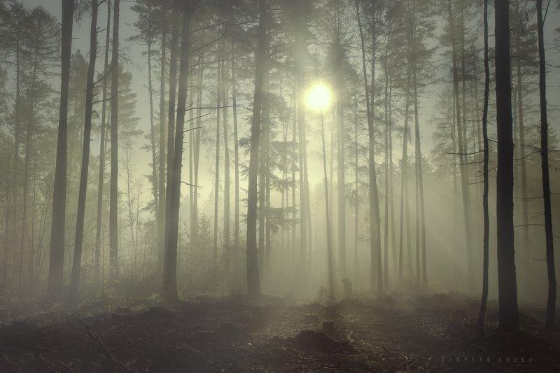 туман,моравское нагорье,моравa,zanfoar,никон d750,czech republic,чехия Красота утреннего туманаphoto preview