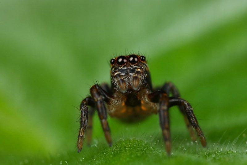 макро,природа,паук,цвет,коричневый,зеленый,черный,животное,растение Кто там?photo preview