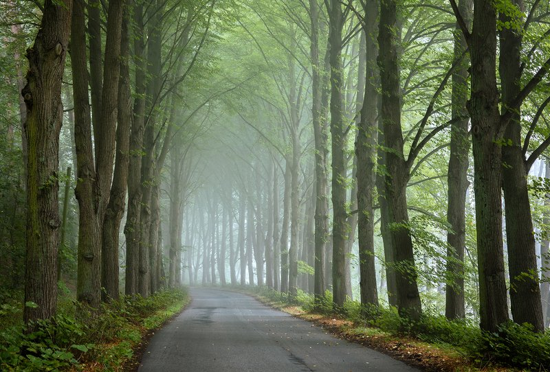 туннель деревьев tunnel road magic path trees mist foggy morning autumn fall дорога dranikowski poland tree park туннель деревьевphoto preview
